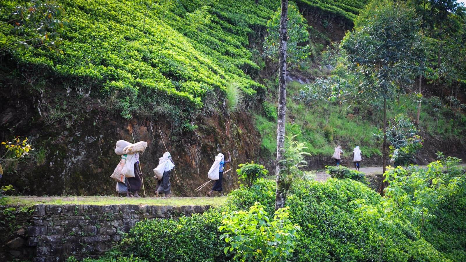 Central Province Sri Lanka