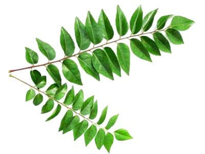 Curry Leaves (Karapincha)
