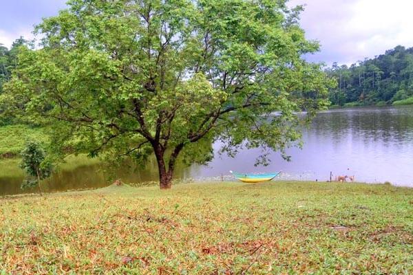 Hiyare Reservoir Rain Forest