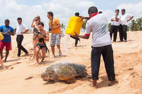 Rekawa Turtle Conservation Project