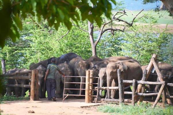 Udawalawe Elephant Transit Home Gallery 1