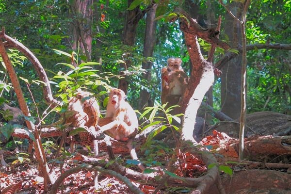 Udawatta Kele Sanctuary Gallery 3